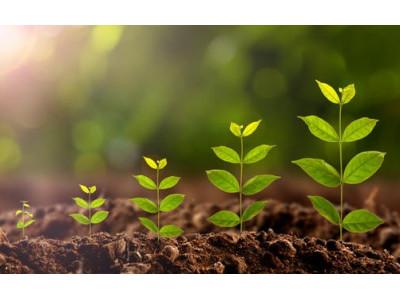 Как ускорить рост растений?